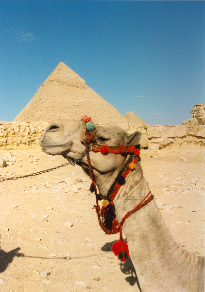kameelpiramide