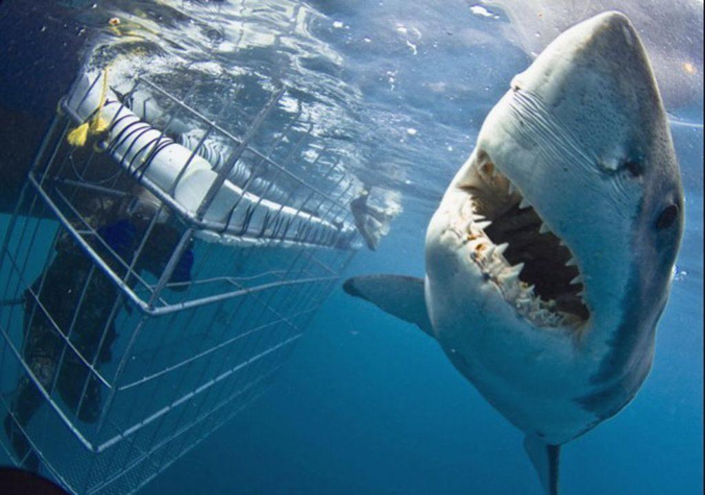 naar de haaien gaan worldexplorer